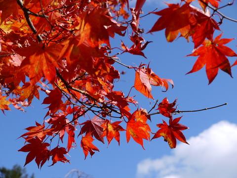 鹿沼 古峰園へ紅葉狩り。_b0116313_23382994.jpg
