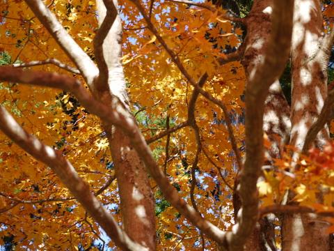 鹿沼 古峰園へ紅葉狩り。_b0116313_2339163.jpg