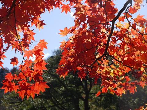 鹿沼 古峰園へ紅葉狩り。_b0116313_23394089.jpg