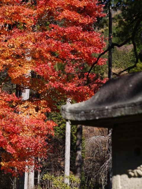 鹿沼 古峰園へ紅葉狩り。_b0116313_23404640.jpg