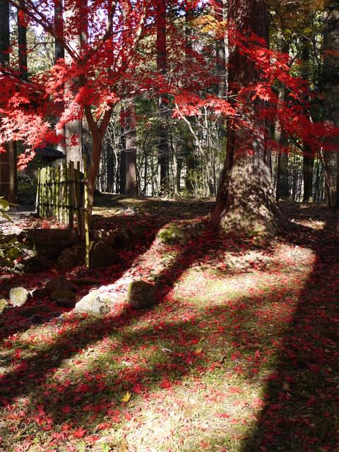 鹿沼 古峰園へ紅葉狩り。_b0116313_23445668.jpg