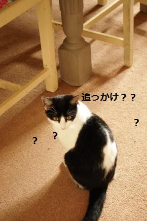キャベツとベーコンのガーリックポン酢炒め_d0104926_22298.jpg