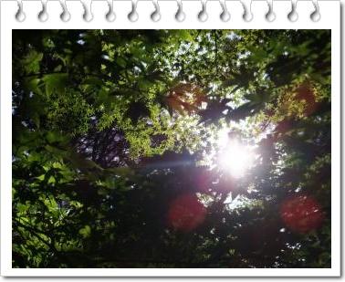 f0195131_015958.jpg