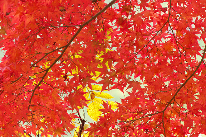 三湖物語・秋 '12 ~多々良木ダム 2~_c0067040_2313243.jpg