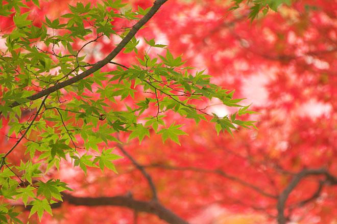 三湖物語・秋 '12 ~多々良木ダム 2~_c0067040_23142610.jpg