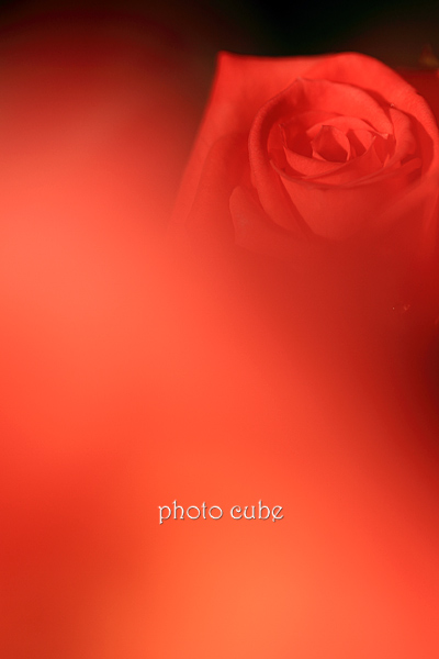 b0195043_0515467.jpg