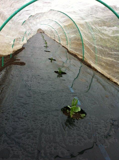 収穫時間 ドンピシャリの雨・・_c0222448_11443129.jpg