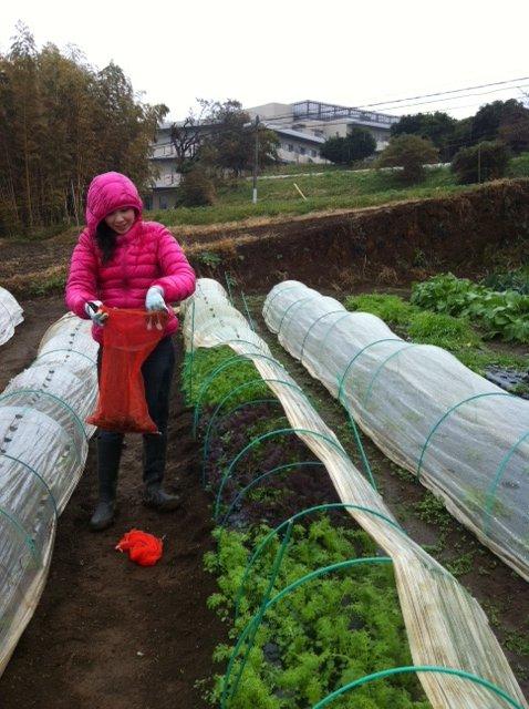 収穫時間 ドンピシャリの雨・・_c0222448_1144762.jpg