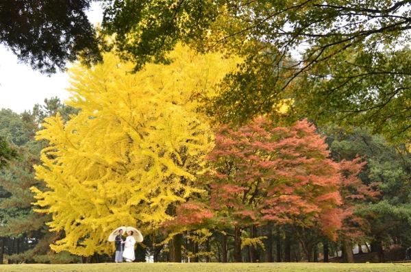 雨の紅葉奈良公園_e0046950_17411224.jpg