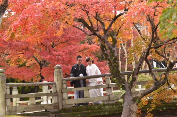 雨の紅葉奈良公園_e0046950_17412751.jpg