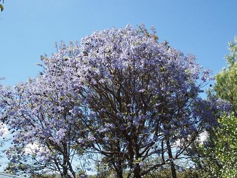 タンザニア:アルーシャからナトロン湖_c0177863_11484521.jpg