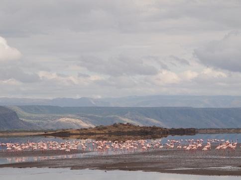 タンザニア:ナトロン湖_c0177863_12542686.jpg