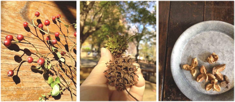 木の実集め。_f0121167_094451.jpg