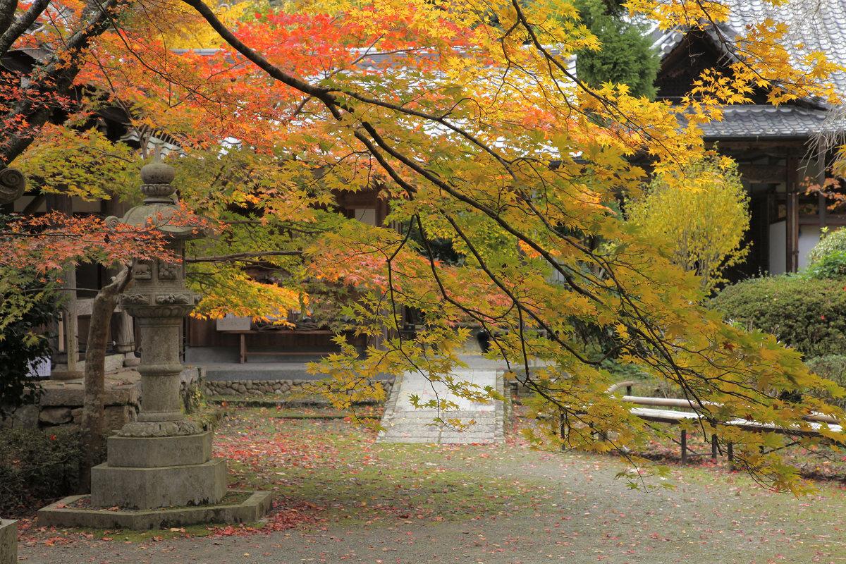 紅葉 2012  西山  金蔵寺_f0021869_2234684.jpg