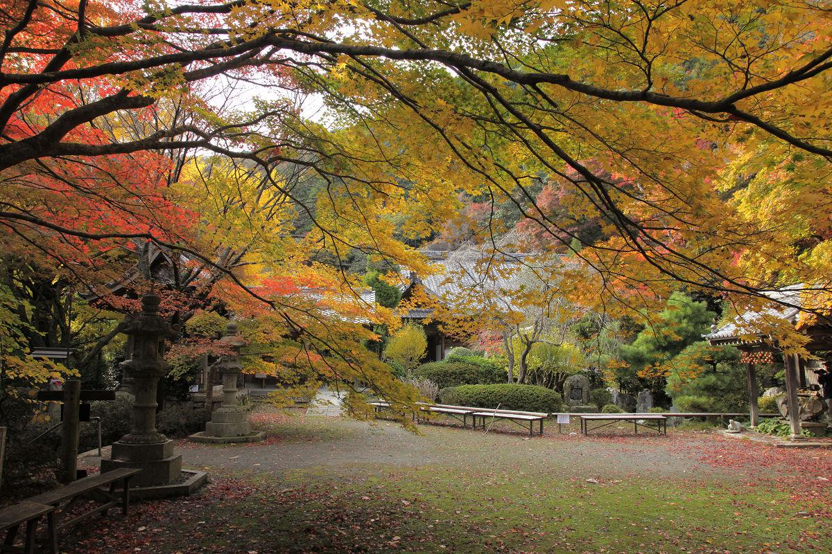 紅葉 2012  西山  金蔵寺_f0021869_22352253.jpg