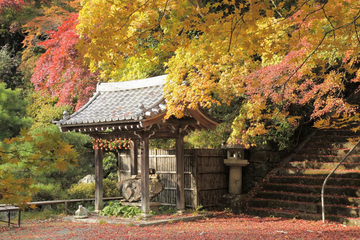 紅葉 2012  西山  金蔵寺_f0021869_22372675.jpg