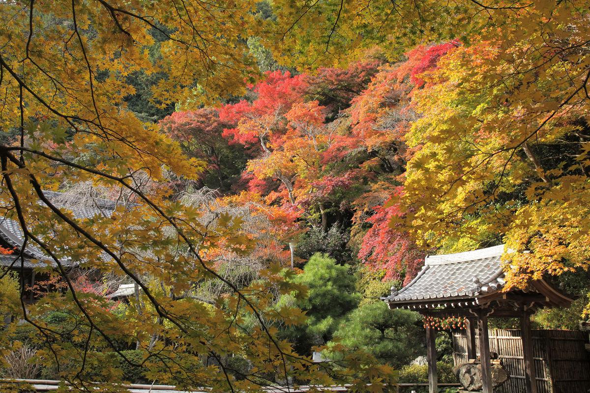 紅葉 2012  西山  金蔵寺_f0021869_22391417.jpg