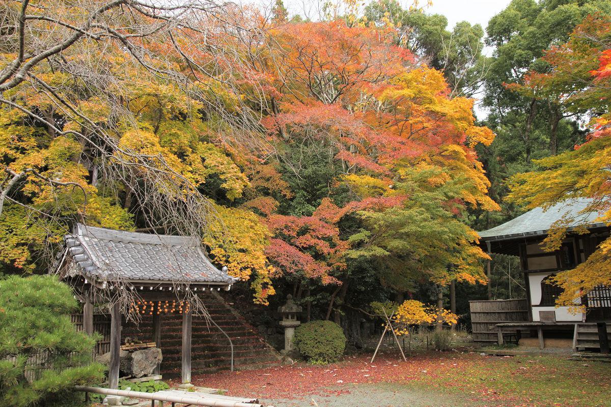 紅葉 2012  西山  金蔵寺_f0021869_22465493.jpg