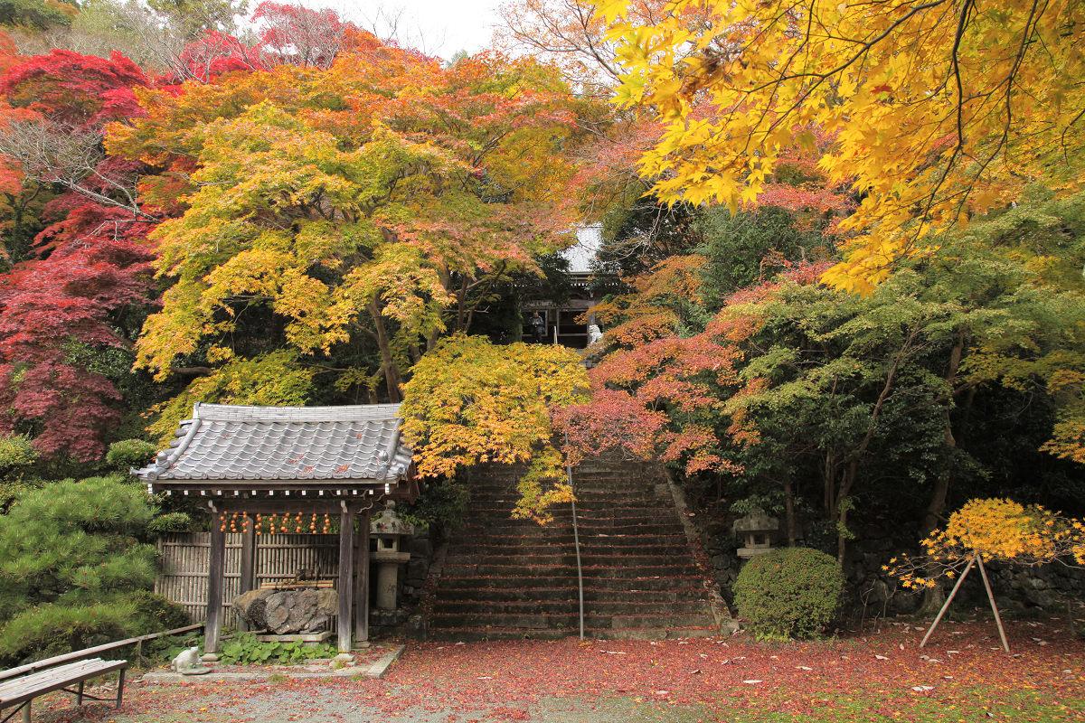 紅葉 2012  西山  金蔵寺_f0021869_22483059.jpg