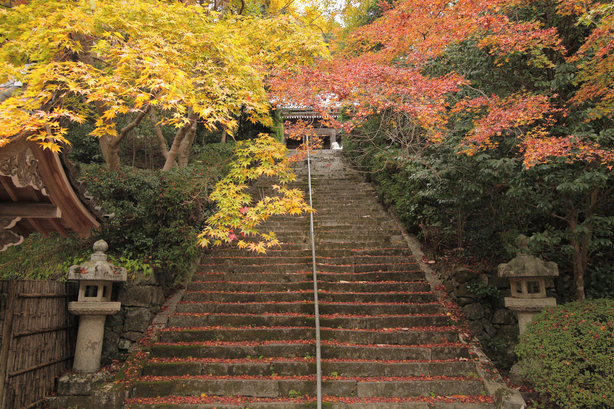 紅葉 2012  西山  金蔵寺_f0021869_22501948.jpg