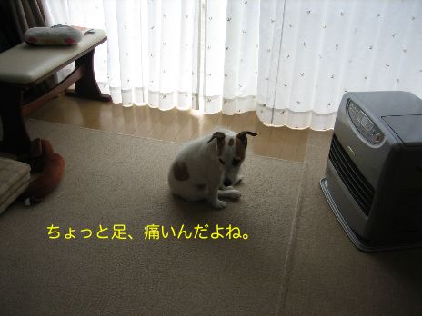 c0179472_6205514.jpg