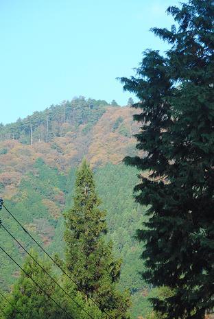 京のお山で誕生日ランラン♪_d0003977_1241243.jpg