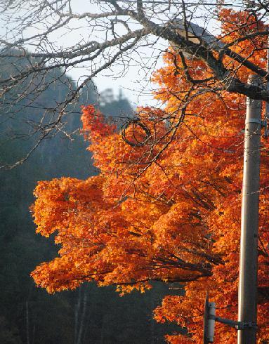 京のお山で誕生日ランラン♪_d0003977_12413145.jpg