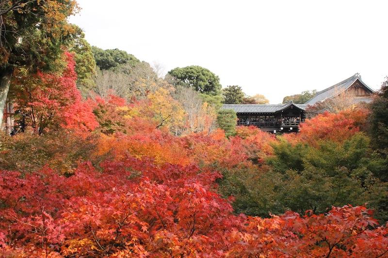 京都の紅葉_c0173978_030930.jpg