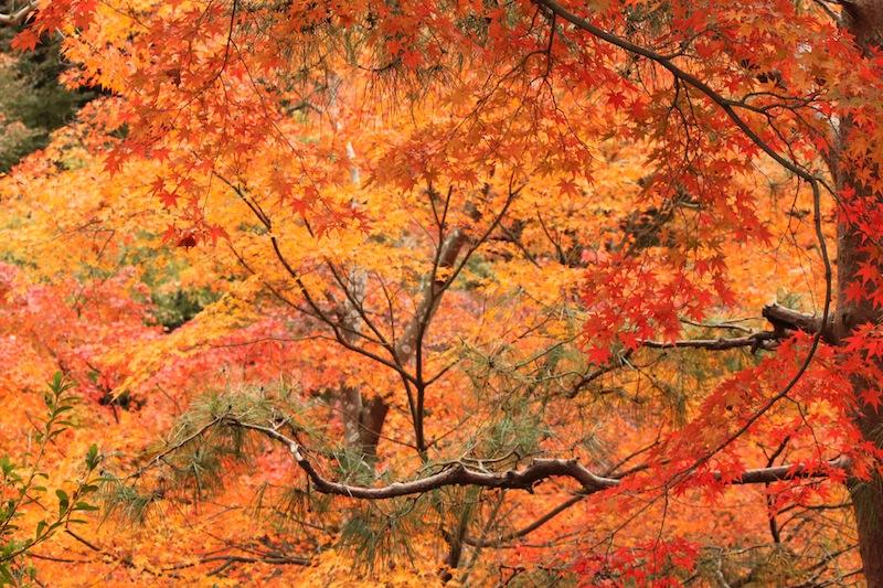 京都の紅葉_c0173978_0314053.jpg