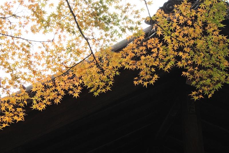 京都の紅葉_c0173978_051367.jpg