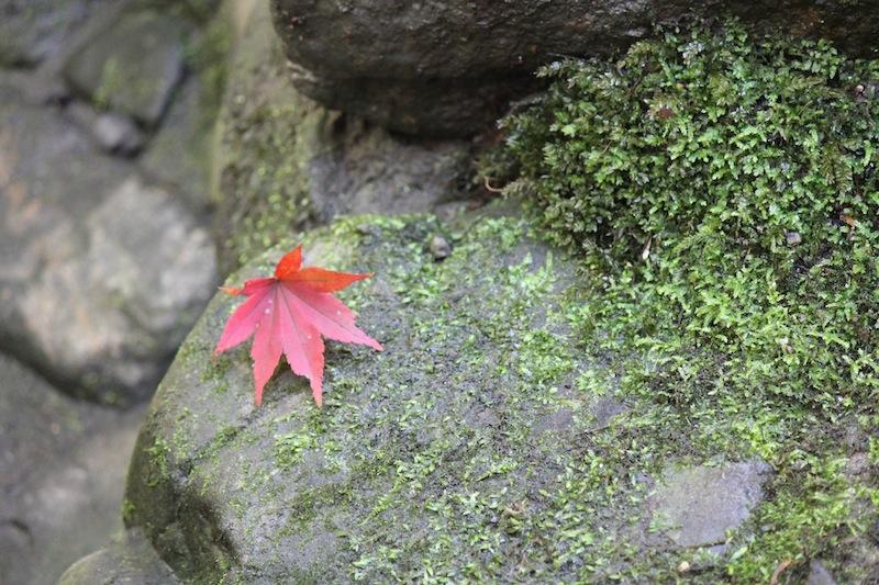 京都の紅葉_c0173978_0525658.jpg