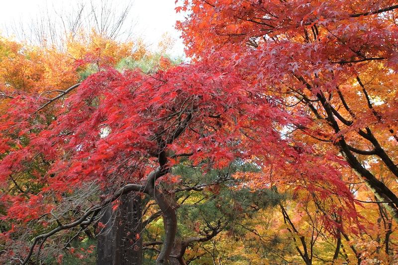 京都の紅葉_c0173978_131920.jpg