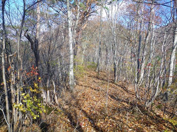 二口山塊の里山を歩く (三森山から桐ノ目山まで) ~ 2012年11月21日_f0170180_173163.jpg