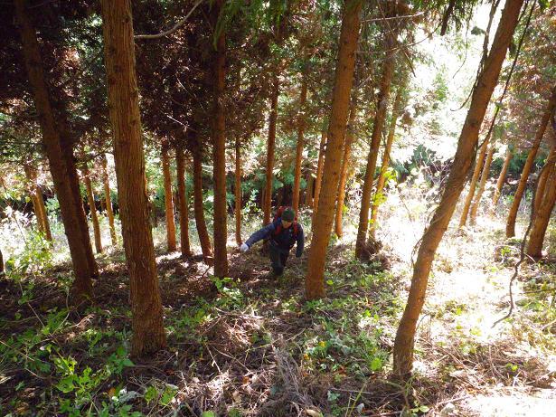 二口山塊の里山を歩く (三森山から桐ノ目山まで) ~ 2012年11月21日_f0170180_18585316.jpg