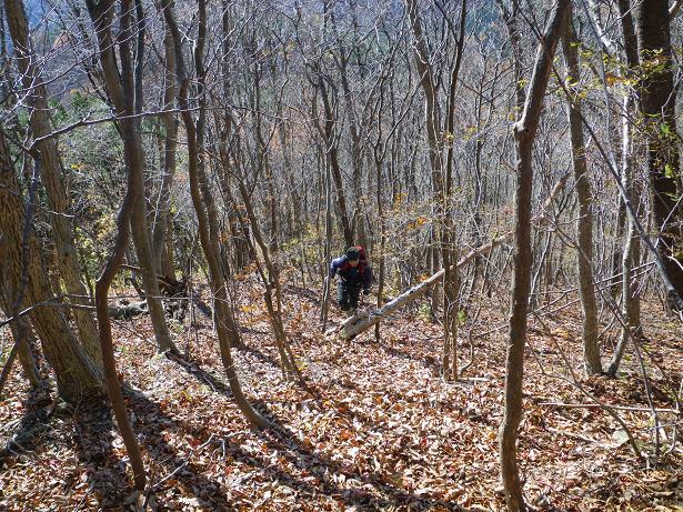 二口山塊の里山を歩く (三森山から桐ノ目山まで) ~ 2012年11月21日_f0170180_1903045.jpg