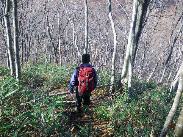 二口山塊の里山を歩く (三森山から桐ノ目山まで) ~ 2012年11月21日_f0170180_1954696.jpg