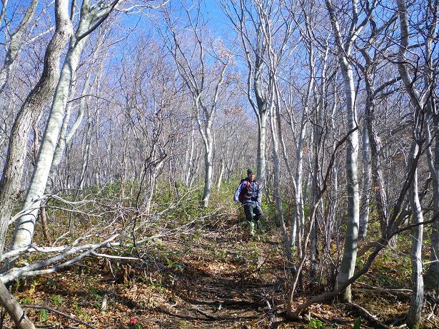 二口山塊の里山を歩く (三森山から桐ノ目山まで) ~ 2012年11月21日_f0170180_1955398.jpg