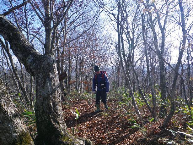 二口山塊の里山を歩く (三森山から桐ノ目山まで) ~ 2012年11月21日_f0170180_19573558.jpg