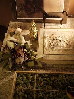 fbomb(フボー)さんの植物たち[2]_f0226293_813363.jpg