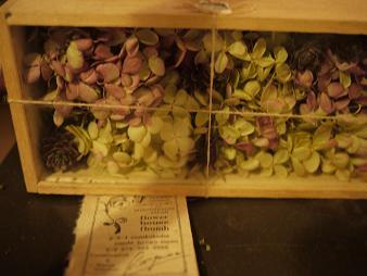 fbomb(フボー)さんの植物たち[2]_f0226293_8152479.jpg