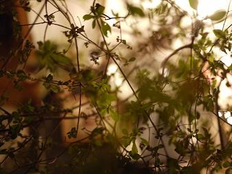 fbomb(フボー)さんの植物たち[2]_f0226293_8155240.jpg