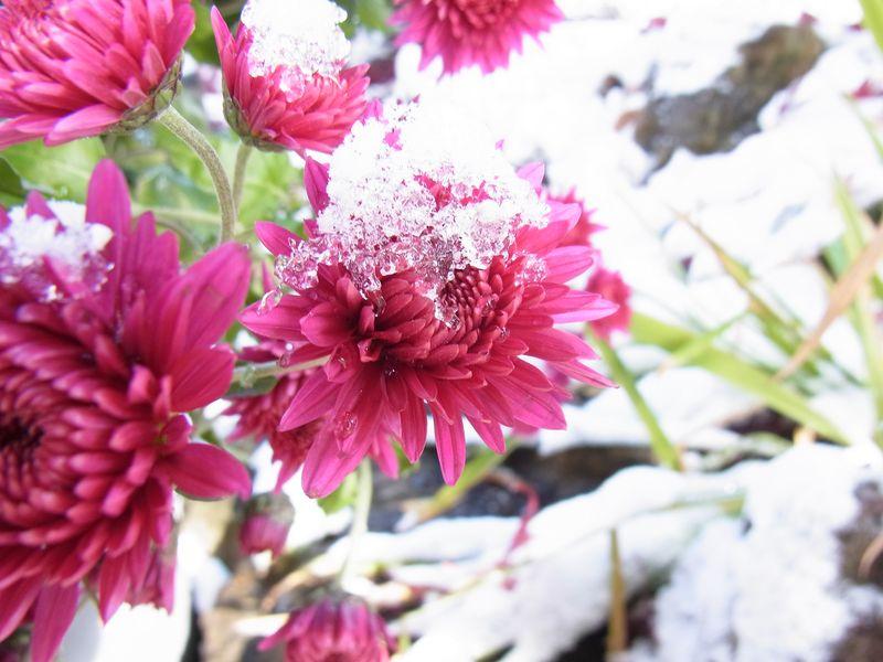 吹雪の翌朝_c0025115_2319584.jpg