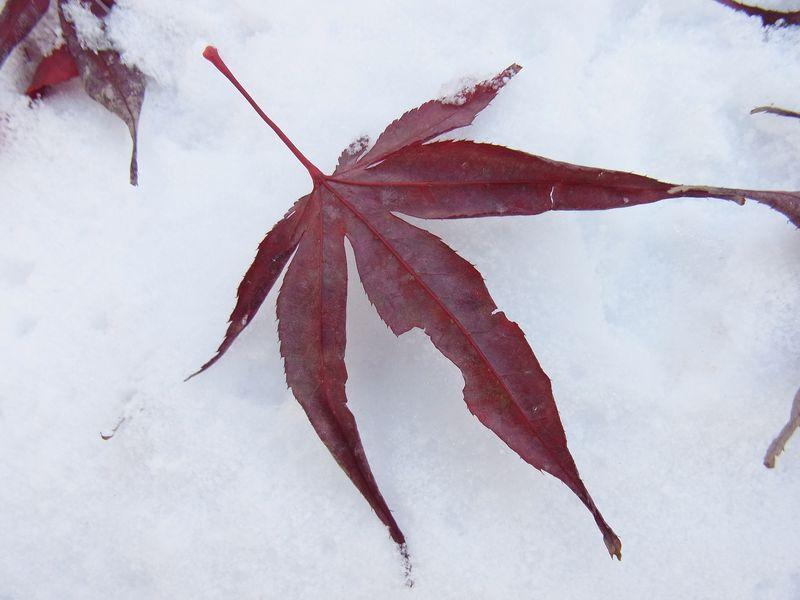 吹雪の翌朝_c0025115_2320136.jpg