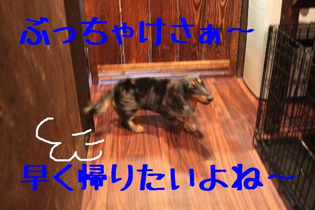 b0130018_18585333.jpg