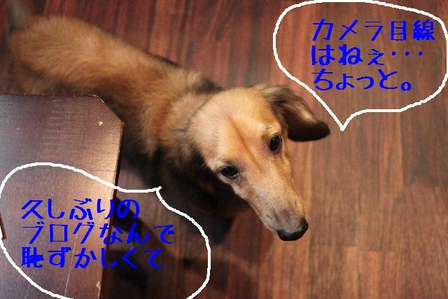 b0130018_1913151.jpg