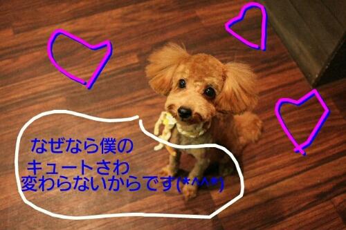 b0130018_8283159.jpg