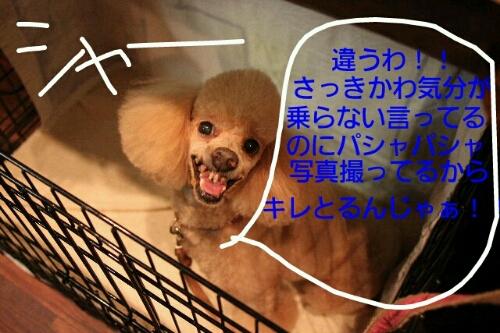 b0130018_831727.jpg