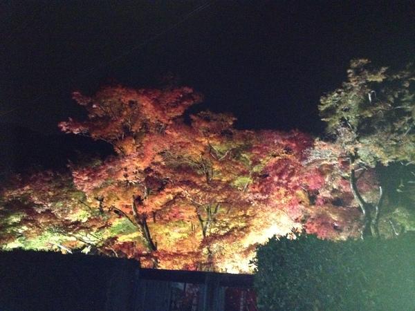 宝厳院さんのライトアップ_a0197730_22243210.jpg
