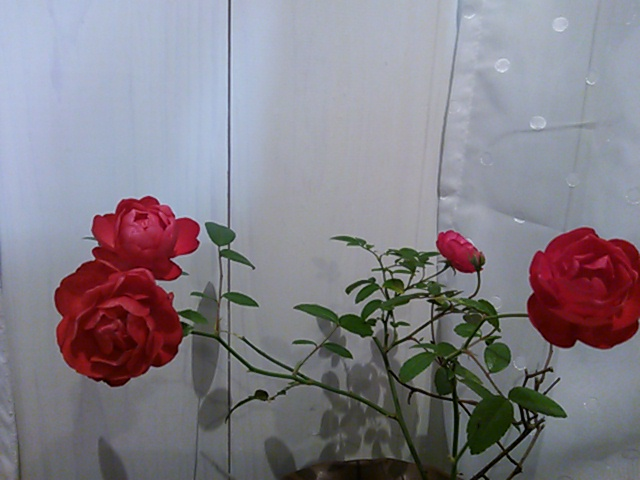 a0211435_21302413.jpg