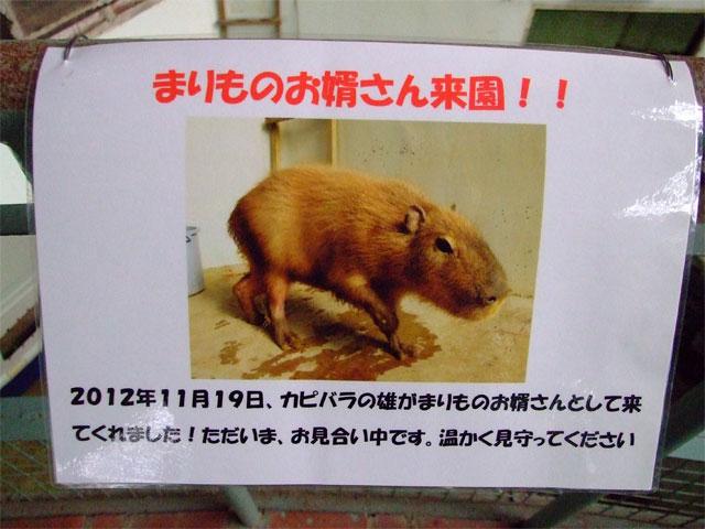 草津温泉にオスカピくんあらわる_a0179837_10481493.jpg